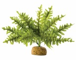 EXO TERRA BOSTON FERN 25CM WIDE - SMALL