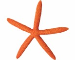AQUA ONE HERMIT CRAB STARFISH ORANGE 15X13.8X1.7CM