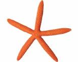 AQUA ONE HERMIT CRAB STARFISH ORANGE 15X13.8X1.7CM