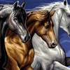 Paint By Numbers Wild Horses