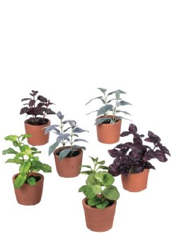 Small Potted Herbs
