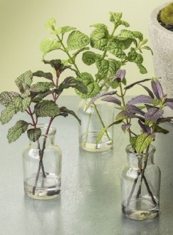 Herbs in Glass Vase