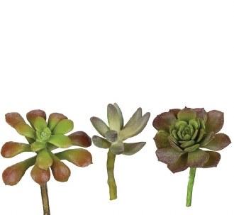 Single Stem Succulent