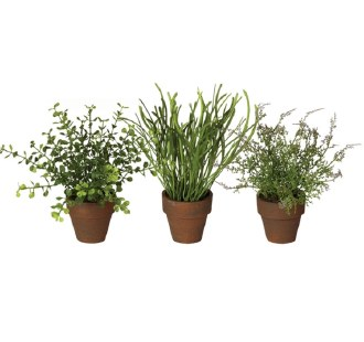 Small Potted Grasses