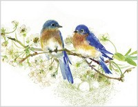 Two Birds - Blank