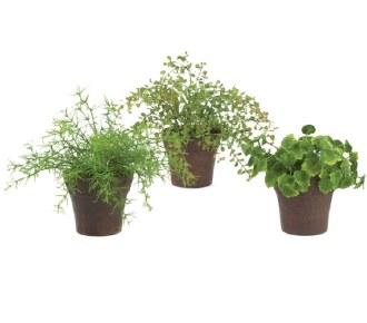 Mini Foliage Potted Plant