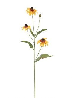 Black Eyed Susan Stem