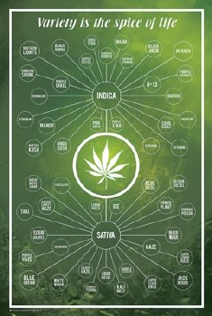 Cannabis Variety Spice of Life