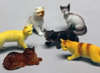 Assorted Cats 6 CT