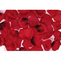 Rose Petals Red 300 CT