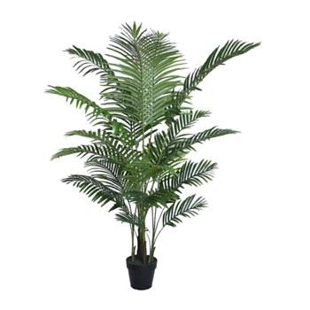 "Areca Palm - 63"""
