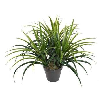 "Grass Plant - 19"""