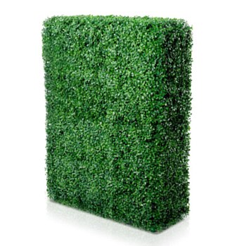 Boxwood Cube Hedge