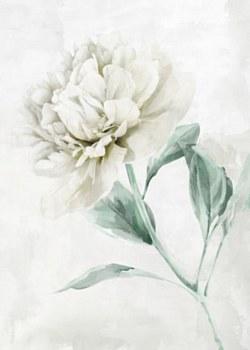 Oil Painting - White Carnation