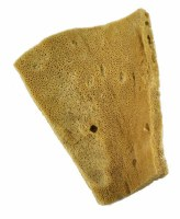 Royal Brush Elephant Ear Sponge 3-1/2x4in
