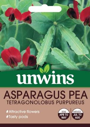 Asparagus Pea Tetragonolobus Purpureus