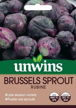 Brussels Sprout Rubine F1