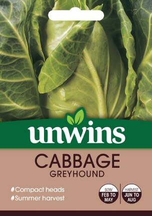 Cabbage (Pointed) Greyhound