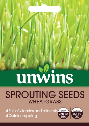 Sprouting Seeds Wheatgrass
