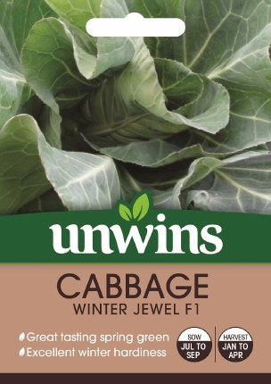 Cabbage (Spring Greens) Winter Jewel