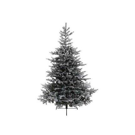 Christmas Snowy Grandis Fir 3 Meter Tall