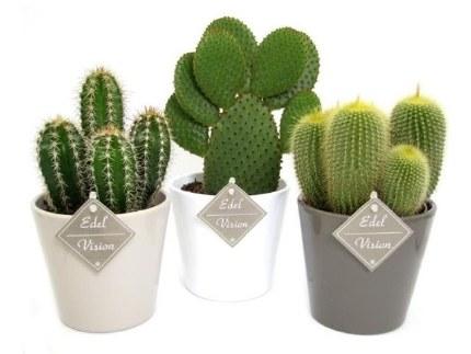 Cactus Mix 13cm