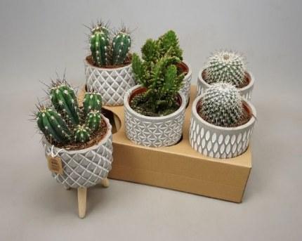 Cactus Mix in Concrete Pot on 3 Legscactus concrete