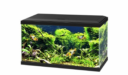 Ciano Aquarium Aqua 60 With Led Lights & Black Lid 60cm x 30cm x 33.5cm