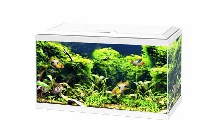 Ciano Aquarium Aqua 60 With Led Lights & White Lid 60cm x 30cm x 33.5cm