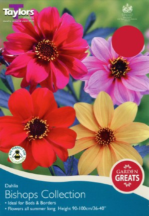 Dahlia Bishops Collection
