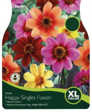 Dahlia Happy Singles Fusion x3