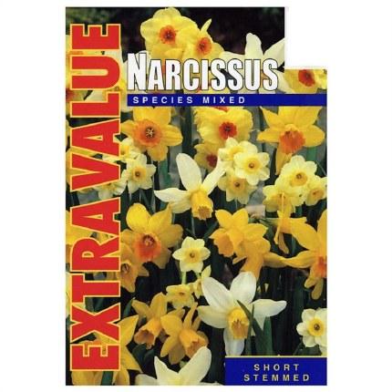 Daffodil - Narcissus Species Mix 25 Pack