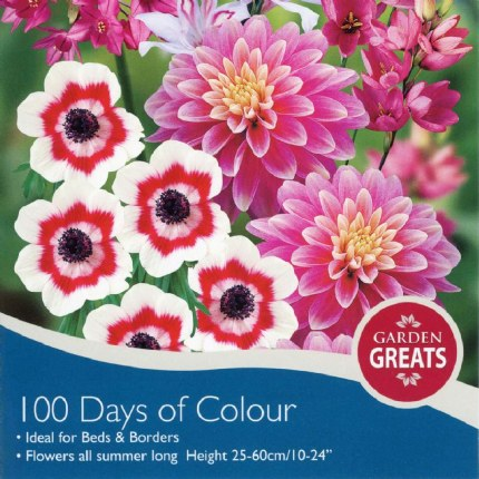 Dahlia 100 Days of Colour Collection  x50