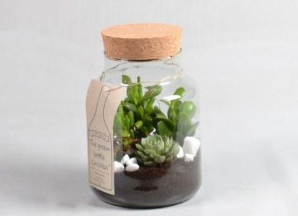 Green Bottle Succulents in glass jar