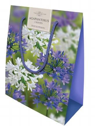 Agapanthus Gift Bag Mix x12