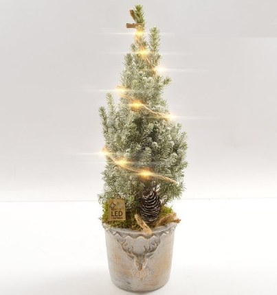Potted Snow Sprayed Conifer in Ceramic pot with Christmas Lights 50cm