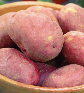 Red Duke Of York Seed Potatoes 10 Pack - First Early