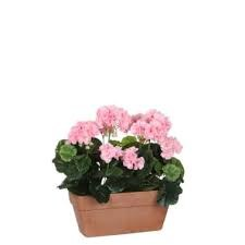 Geranium Pink Balcony Tray Terra