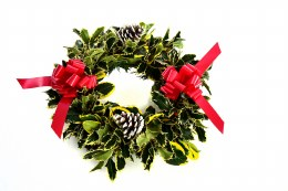 Pre-Order Fresh Holly Wreath Variegated & Decorated with Red Ribbon 16""