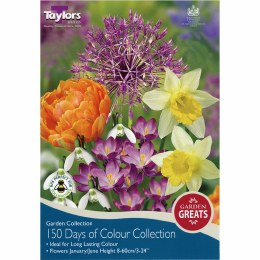 Taylors Bulbs 150 Days of Colour - Pack of 50 Bulbs