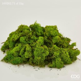 Green Moss suitable for cribs 100g