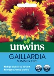 Gaillardia Summer Fire