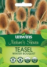 Natures Haven - Teasel Winter Bouquet