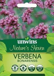 Natures Haven - Verbena Bonariensis