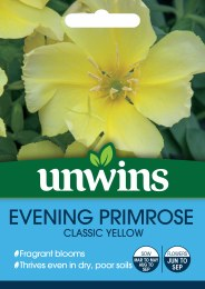 Wildflower Evening Primrose