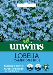 Lobelia Cambridge Blue (Bush)