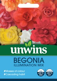 Begonia Illuminations Mix