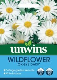 Wildflower Ox-Eye Daisy