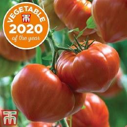 Tomato Gourmandia F1 Hybrid