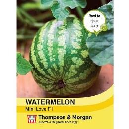 Watermelon Mini Love F1